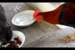 Chó mèo bất lực khi bị 'siêu đạo chích' gà 'cướp trên giàn mướp'