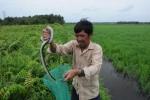 Rùng mình cảnh đi săn rắn độc ở Sài Gòn
