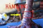 Bí kíp chọn gà chọi đá hay nhất, cách xem chân gà cực độc
