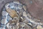 Người dân ở Đắk Lắk bắt được con vật lạ có 2 lỗ mũi chính và 7 lỗ hô hấp