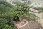 Video: 'Đại thần mộc' nghìn năm tuổi ở Bắc Giang, không ai dám chặt