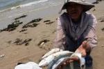 Formosa là nguyên nhân gây ra cá chết hàng loạt ở miền Trung