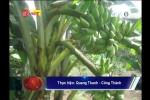 Đổ xô đi xem cây chuối trổ 2 buồng ở Đồng Nai