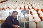 Cô giáo cho gà nghe nhạc kích đẻ trứng, thu nhập hàng chục triệu đồng mỗi tháng
