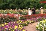Video: Lạc vào thung lũng hoa bốn mùa đẹp như cổ tích ở Hồ Tây