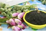 Trà ướp trong hoa sen tươi: Món quà độc đáo của người Hà Nội