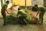 Video: Phát hiện hàng trăm cây cần sa trồng trong rẫy cà phê ở Đắk Lắk