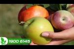 Tuyệt chiêu nhận biết táo Trung Quốc
