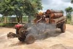 Bắt 2 xe công nông chở gỗ xoan đào trái phép đang trên đường tiêu thụ
