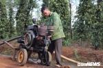 Người trồng cà phê trốn Tết, tranh nhau 'cướp nước trời' ở Gia Lai