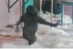 Clip: Khỉ đột hưng phấn khiêu vũ và cái kết 'méo' mặt