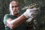 Chuyện lạ: Trăn rừng dài 2m được đưa đi cai nghiện vì hít ma túy đá nhiều năm