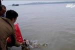Chi cục Thủy sản Hà Nội: Cá chim trắng phóng sinh không gây hại cho môi trường