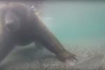 Video: Cận cảnh tuyệt chiêu săn cá dưới nước của gấu nâu