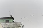 Nhà nhà nuôi chim yến gây ồn, TP.HCM tính chuyện xóa sổ 'nhà yến' khỏi nội đô