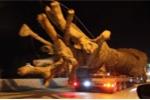 Xe chở cây khổng lồ trên quốc lộ xôn xao dư luận: Tướng Nguyễn Hữu Dánh lên tiếng