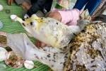 Câu được ba ba 'lạ' màu trắng ở Đắk Nông, chủ nhân rao bán 50 triệu đồng