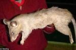 Mẹ đi chơi thâu đêm, bỏ con gái bị chuột khổng lồ cắn chết thương tâm