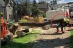 Clip: Công nhân cưa cây, cây đổ đè trúng đồng nghiệp