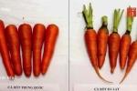 Cách phân biệt cà rốt ta và cà rốt Trung Quốc