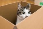 Bỏ rơi mèo, chủ bị phạt 45 triệu đồng