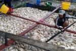 Nguyên nhân ban đầu khiến cá chết trắng trên sông La Ngà, Đồng Nai