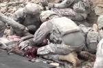 Phóng sự trong ổ phục kích ở Afghanistan của nhà báo Mỹ bị hành quyết