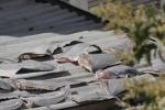 Phơi vây cá mập tại thương vụ Việt ở Chile: Bộ Công Thương yêu cầu báo cáo gấp
