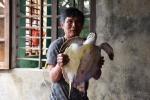 Đổ xô đến xem và chụp ảnh rùa biển 'khủng' ở Hà Tĩnh