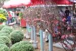 Video: Đào Nhật Tân xuống phố đón Tết sớm