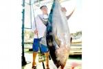 Tận mắt cá ngừ vây vàng 200kg giá 20 tỷ đồng