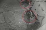 Clip: Trộm chó mất hết tính người, quăng thòng lọng cướp chó kéo lê cả chủ