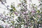 Tháng 3 chạm ngõ Hà Nội, đẹp vô cùng với những mùa hoa lung linh