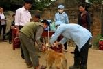 Đắk Lắk: Bị chó cắn, 2 người mắc bệnh dại chết