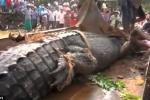 Video: Phát hiện cá sấu 'quái vật' nặng 1 tấn ở Sri Lanka
