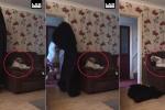 Clip làm ảo thuật trước mặt chó cưng hút triệu lượt xem trên Facebook