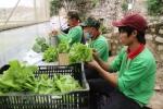 Kiên Giang: Ứng dụng công nghệ cao trong nông nghiệp