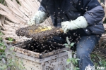 Đặc sản mật ong bạc hà ở cao nguyên đá Đồng Văn