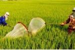 Săn 'lộc trời' mùa gặt trên cánh đồng bất tận xứ Nghệ