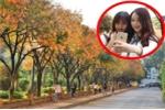 Video: Thiếu nữ đổ xô đi 'check in' con đường lá vàng đẹp như Hàn Quốc ở Hà Nội