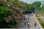 Hà Nội chặt, chuyển 130 cây xanh trên đường Kim Mã để làm đường sắt đô thị
