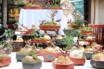 Ảnh: Nấm linh chi bonsai độc lạ hút khách chơi Thủ đô