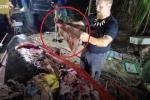 Clip: Kinh hãi cảnh phanh xác cá voi, lấy ra 40 kg rác thải nhầy nhụa