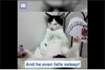 Chú mèo có biệt tài giữ thăng bằng đồ vật cực 'bá đạo'