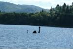 Quái vật hồ Loch Ness chỉ là con cá chình đột biến với kích thước quá khổ?