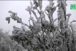Cây cỏ đông cứng vì băng giá, du khách thích thú kéo lên Mẫu Sơn
