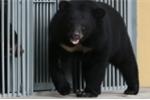 Người phụ nữ nuôi gấu 2 năm vì tưởng mua được chó ngao Tây Tạng