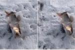 Clip: Cá ngắc ngoải giãy giụa khi bị đóng băng giữa trời -30°C