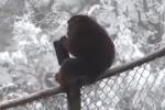 Video: Đi du xuân bị khỉ giật ví, tung cả xấp tiền lên trời