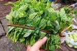 Rau xanh ăn hàng ngày: Tươi non mơn mởn ngập trong hóa chất và nước thải